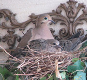 Spring nesting time at the Center